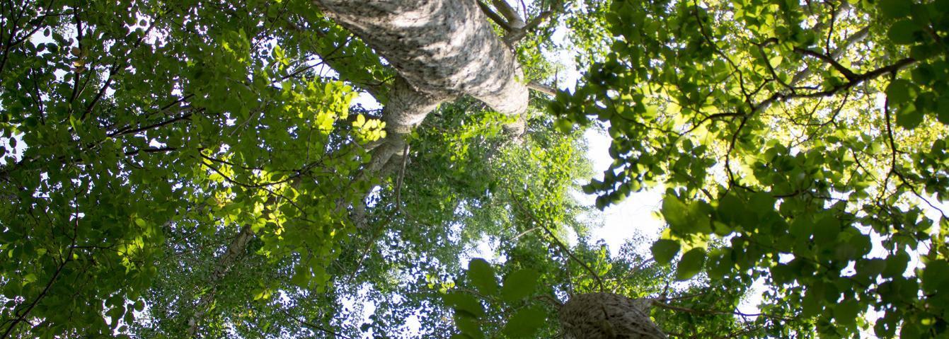 Enjoy Arbor Day at the Ambler Arboretum of Temple University.