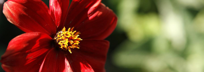 A flower blooms in the Ambler Arboretum.