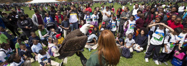 The Elmwood Park Zoo eagle visits Temple University Ambler EarthFest.