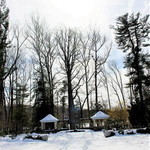 Take a winter walk in the Ambler Arboretum of Temple University.