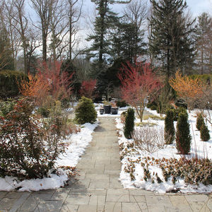 Arboretum Director's Winter Walk — February Flower Foray