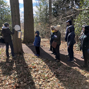 Tapping the Sap: More Than Maples