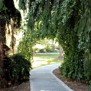 Ambler Arboretum.