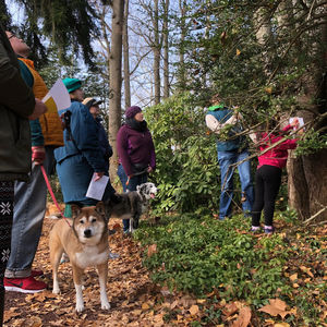 Ambler Arboretum Presents: Bark Walk