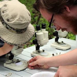 EarthFest and Ambler Arboretum Present: Fall BioBlitz and Green Careers Fair