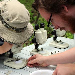 EarthFest and Ambler Arboretum Present: Fall BioBlitz and Green Careers Fair