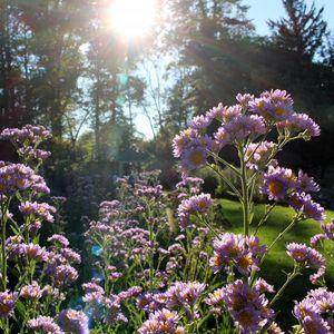 Sunset in the Ambler Arboretum.