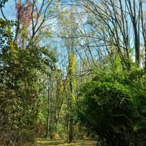 Take a woodland in the Ambler Arboretum of Temple University.
