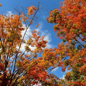 Ambler Arboretum Presents: Fall Foliage Hike - Saturday, November 3