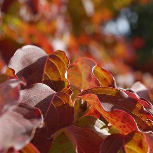 Ambler Arboretum Presents: Fall Foliage Hike