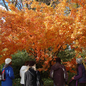 Take a fall walk in the Ambler Arboretum of Temple University.