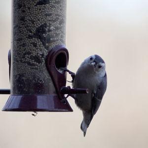 Ambler Arboretum Speaker Series: Attracting and Identifying Feeder Birds — Virtual Event