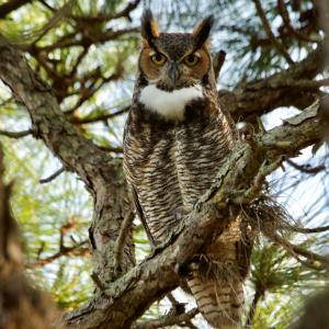 WVWA: All About Owls - Friday, November 16