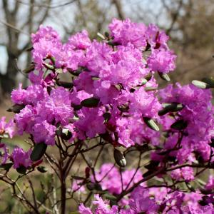 Spring blooms in the Ambler Arboretum.