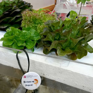 Explore Aquaponics at Temple Ambler
