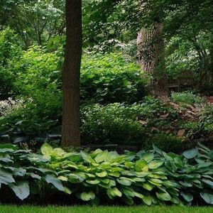 Ambler Arboretum Speaker Series: An Introduction to Organic Landcare