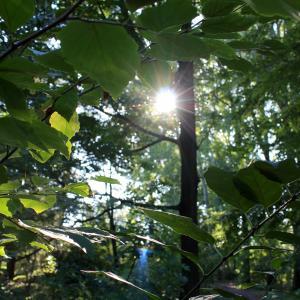 Sun shining in the Ambler Arboretum.