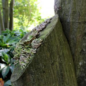 Mushrooms and fungi in the Ambler Arboretum