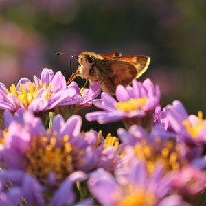 Ambler Arboretum Speaker Series: Nature Journaling