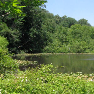 ASLA will visit the Pennypack Ecological Restoration Trust.