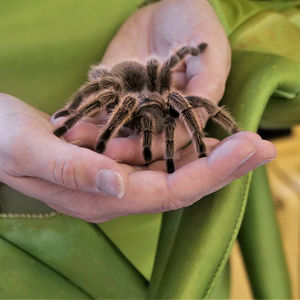 A tarantula at the Science of Scary.