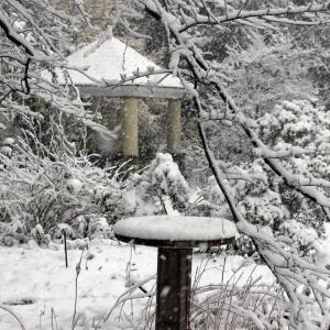 Take a winter walk in the Ambler Arboretum of Temple University.