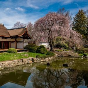 Ambler Campus Shofuso Japanese House And Garden Tour Calendar Of Events