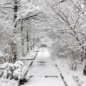 Take a winter hike in the Ambler Arboretum of Temple University.
