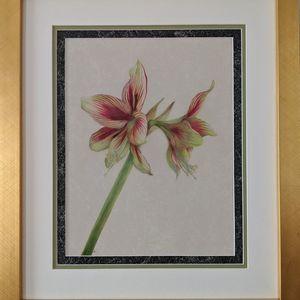 Ambler Arboretum Speaker Series: See A Flower, Draw a Flower — Hands-On Virtual Botanical Drawing Workshop