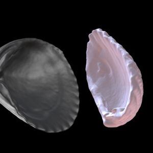 3D model of a shell