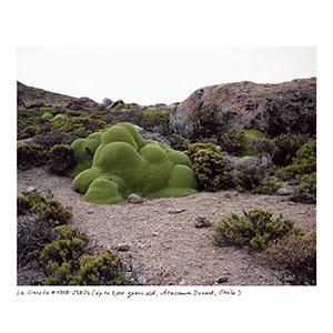 living moss