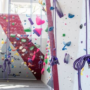 The Aramark Student Training and Recreation Complex Climbing Wall with purple climbing ropes hanging down it.